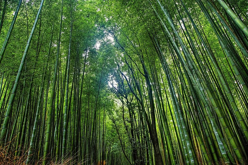 National Bamboo Mission