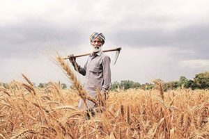 What are the different Agriculture Loan Schemes in India