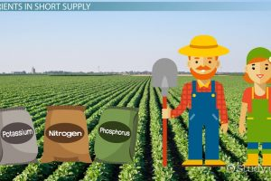 different types of fertilizers used in agriculture in India