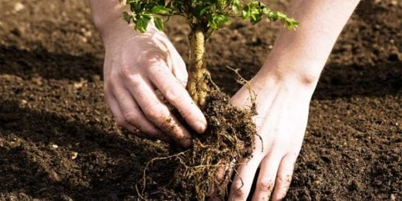 Plant Trees, Get Rs. 50'