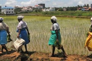 UN report says fragile climate puts food security at risk